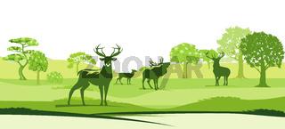 Natur und Hirsche.jpg