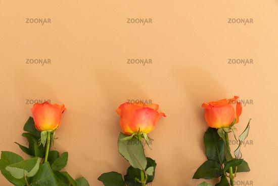 Three orange roses lying separately from bottom on orange background
