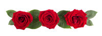 Red rose flowers and leaves on white