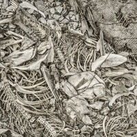 fish bones and remains background