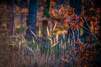 Colourful autumn scene with orange leaves and sunny grasses