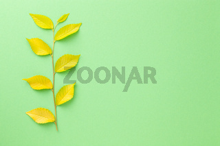 Minimal Background With Elm Tree Twig