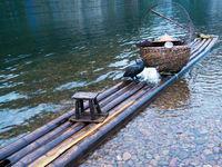Cormorant on raft
