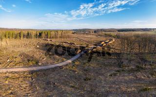 Waldsterben durch die Trockenheit und Borkenkäfer