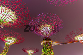 Skyway and artificial Super tree illuminated at night at Singapore Garden by the bay
