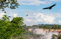 Condor over Iguazu