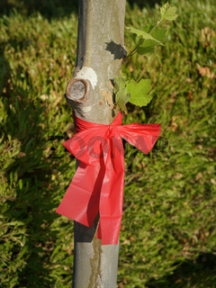 Red ribbon tied around a tree trunk