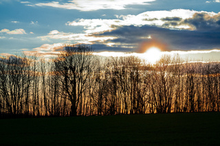 Golden sunset behind bare-branched trees in spring