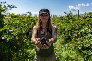 woman in you pick blackberries farm