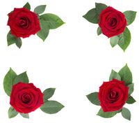 Red rose flowers corner design on white