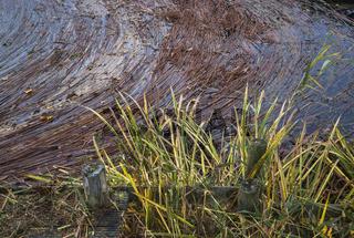 Insel Usedom - Angeschwemmt