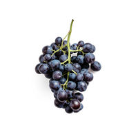 Organic dark grape bunch isolated on white