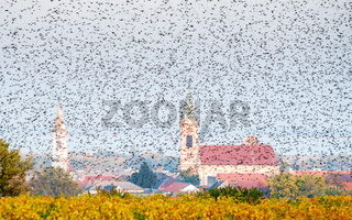 flock of starlings at city of rust at lake neusiedl