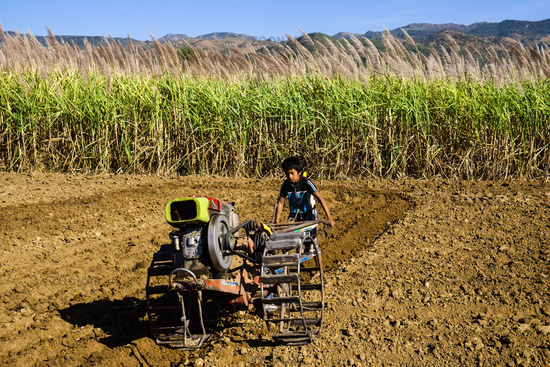Boy with two-wheel tractor, Myanmar
