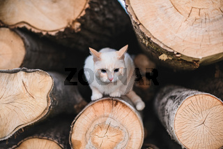 the cat lies on logs with a shallow depth of field