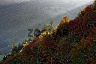 Herbstwald bei Todtnau im Schwarzwald