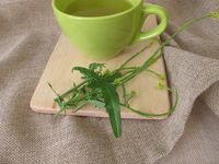 A cup of tea with hedge mustard