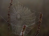 A spider web covered with dew drops entangled dry stalks of field weeds
