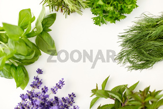 greens, spices or medicinal herbs on white