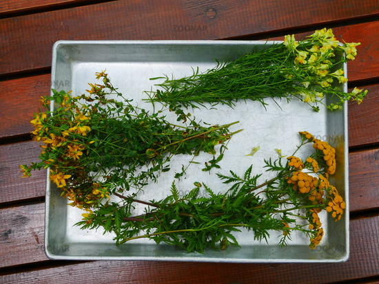 small bouquets of medicinal herbs