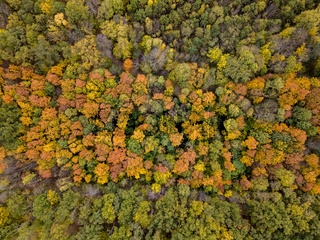 Aerial autumn landscape from colorful trees in the forest area.