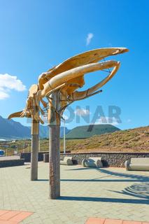 Skeleton of a Sei Whale in Los Silos in Tenerife