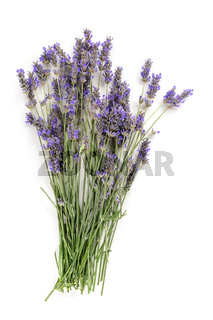 A fresh bouquet of blooming lavender flowers, shot from the top on a white background