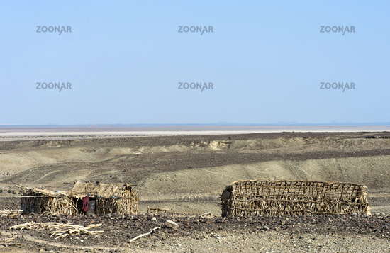 Wooden shelters of Afar people, Danakil depression, Afar Triangle, Ethiopia