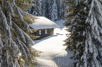 Old wooden snowy ski cabin hidden behind Trees in the Alps near Hauchenberg Diepholz. Allgau, Bavaria, Germany.