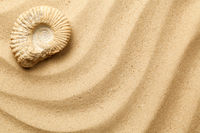 Ammonite On Sea Sand Background