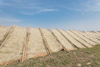Upward view row of bamboo fences with Vietnamese rice vermicelli drying in the sun outside of Hanoi, Vietnam