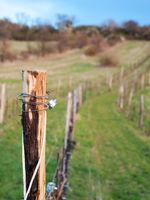 Wire at a vineyard in Burgenland