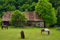 A lush green meadow with three ponies in front of an old stable