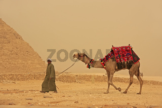 Bedouin walking with camel near Pyramid of Giza, Cairo