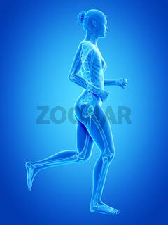 medical 3d illustration - jogging woman - visible bones