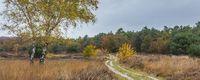 Autmn landscape with white birch