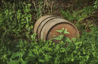 A barrel was deposed in forest...