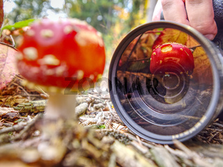Mushroom mirroring in camera lens while photographer  work