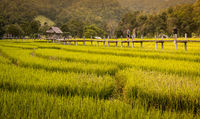 Bamboo bridge and rice paddies, Pai, Thailand