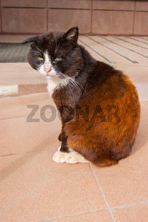 An unhappy very sad street cat sits on warm concrete and basks in the sun in the summer.