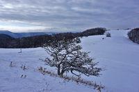 winter landscape on the swabian alps, germany