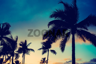 Dramatic Tropical Island Vacation Travel Background With Palm Trees at Sunset