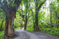 Road in jungle
