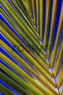 Green palm leaf. Natural background