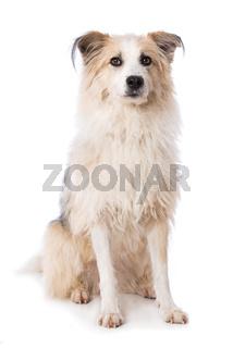 Cute dog sitting on white background