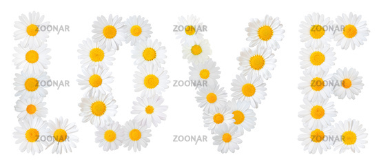 Many white daisies (Marguerite) formed the word