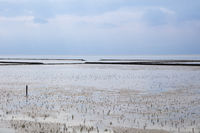 Low tide at the National park Waddensea