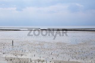 Ebbe im Nationalpark Wattenmeer