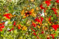 Summer wildflowers in Colorado.