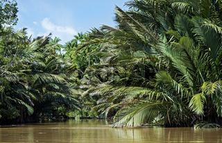 Nipapalmenwald am Flussufer, Kinabatangan Flussebene, Sabah, Borneo, Malaysia